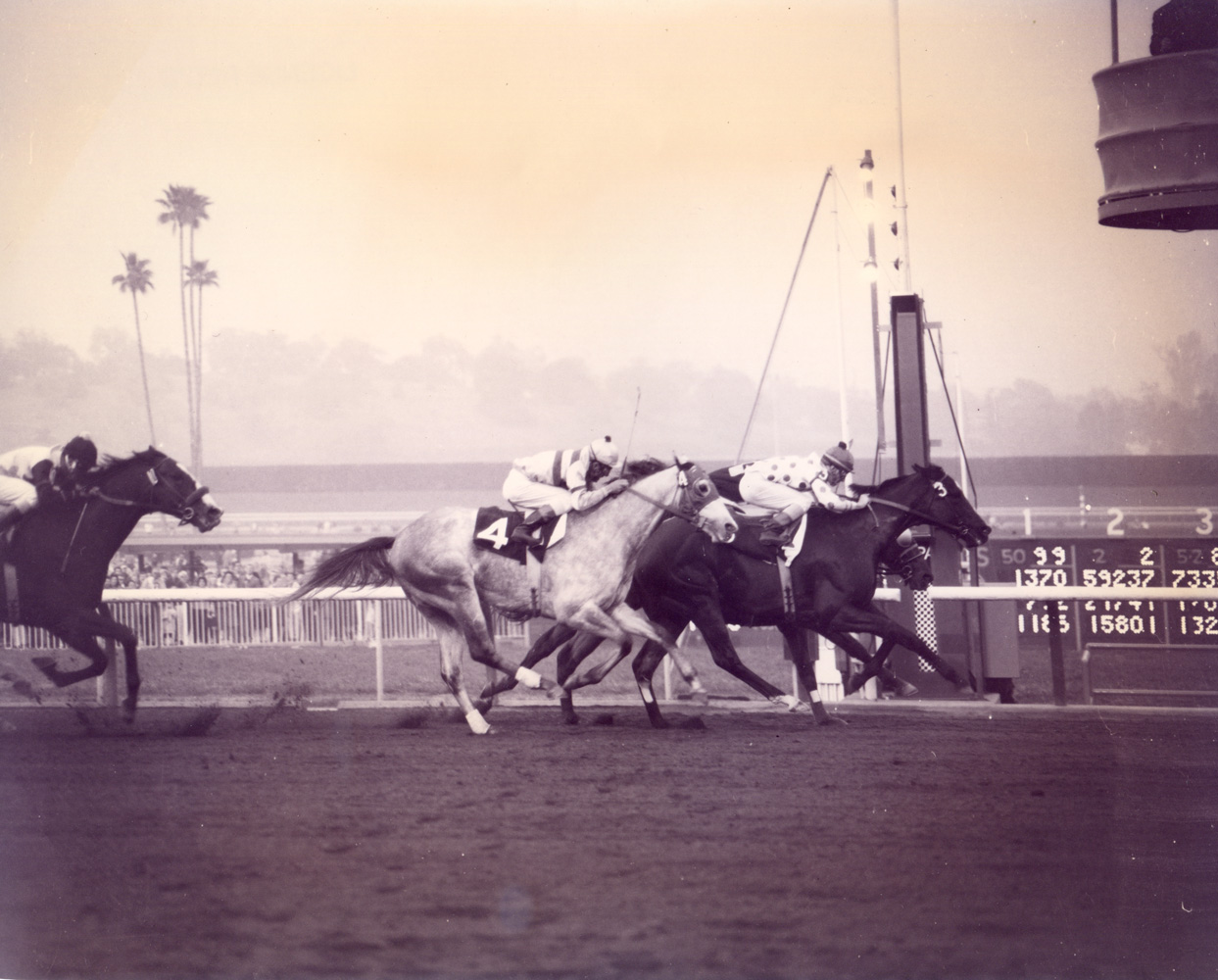 Native Diver (J.erry Lambert up) winning the 1966 San Pasqual Handicap at Santa Anita by a head (Santa Anita Photo/Museum Collection)