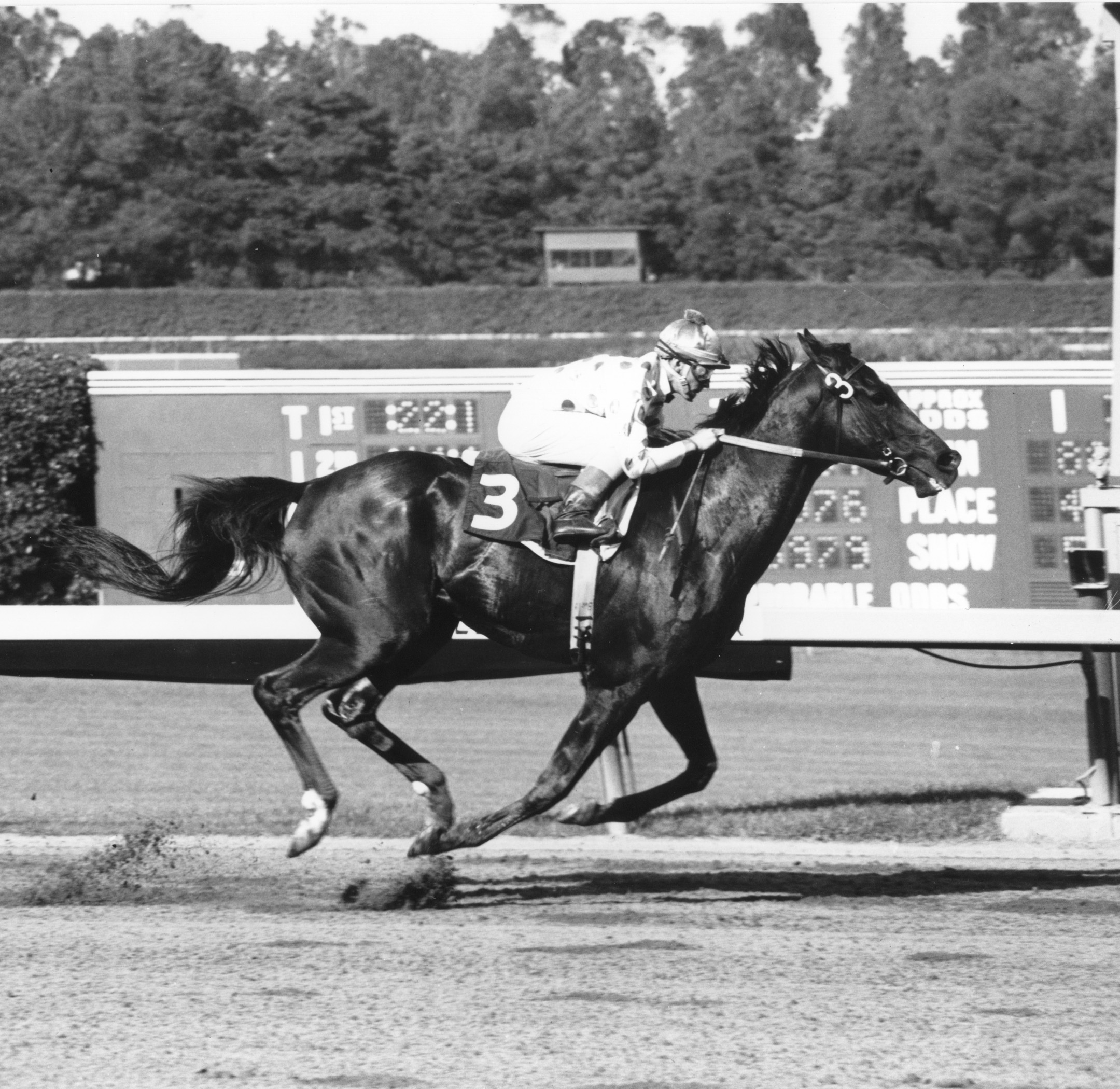 Native Diver (Jerry Lambert up) winning the 1965 Hollywood Gold Cup at Hollywood Park (Stidham & Assoc./Museum Collection)