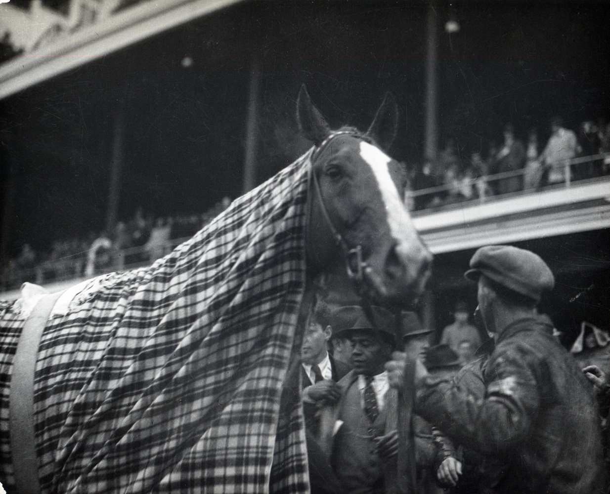 Omaha cooling down after a race in 1935 (Caulfield & Shook/Museum Collection)