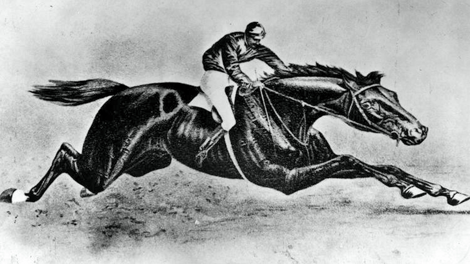 An illustration of Preakness (Keeneland Library Collection)