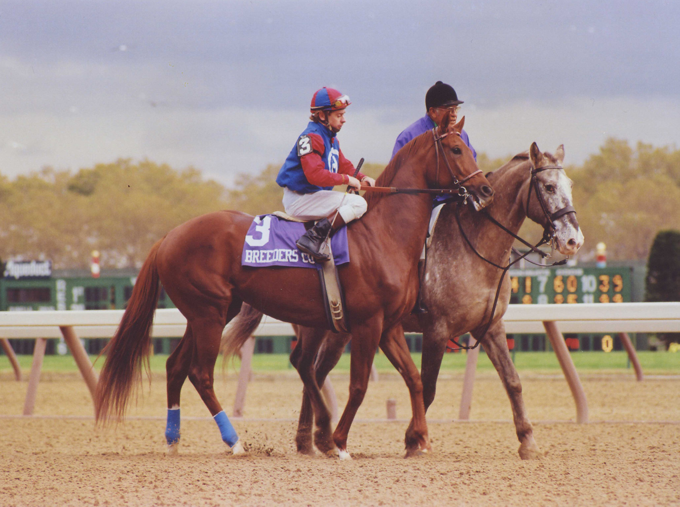 Precisionist (Chris McCarron up) in the post parade for the 1985 Breeders' Cup Sprint at Aqueduct (Barbara D. Livingston/Museum Collection)