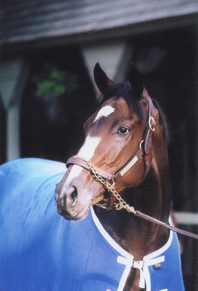Rachel Alexandra at Saratoga, July 2009 (Mike Pender/Museum Collection)