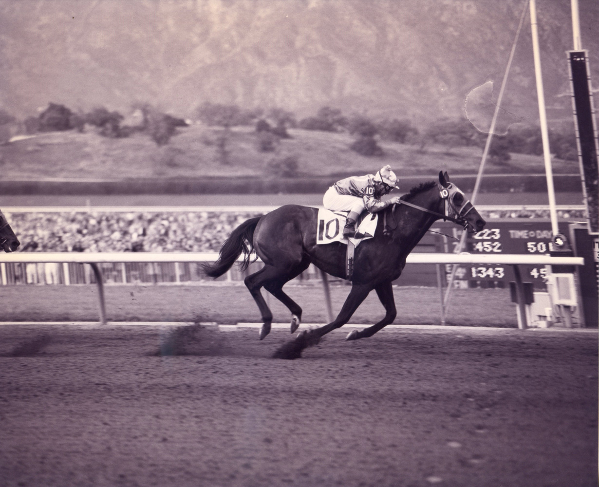 Round Table (Bill Shoemaker up) winning the 1958 Santa Anita Handicap at Santa Anita Park (Santa Anita Photo/Museum Collection)