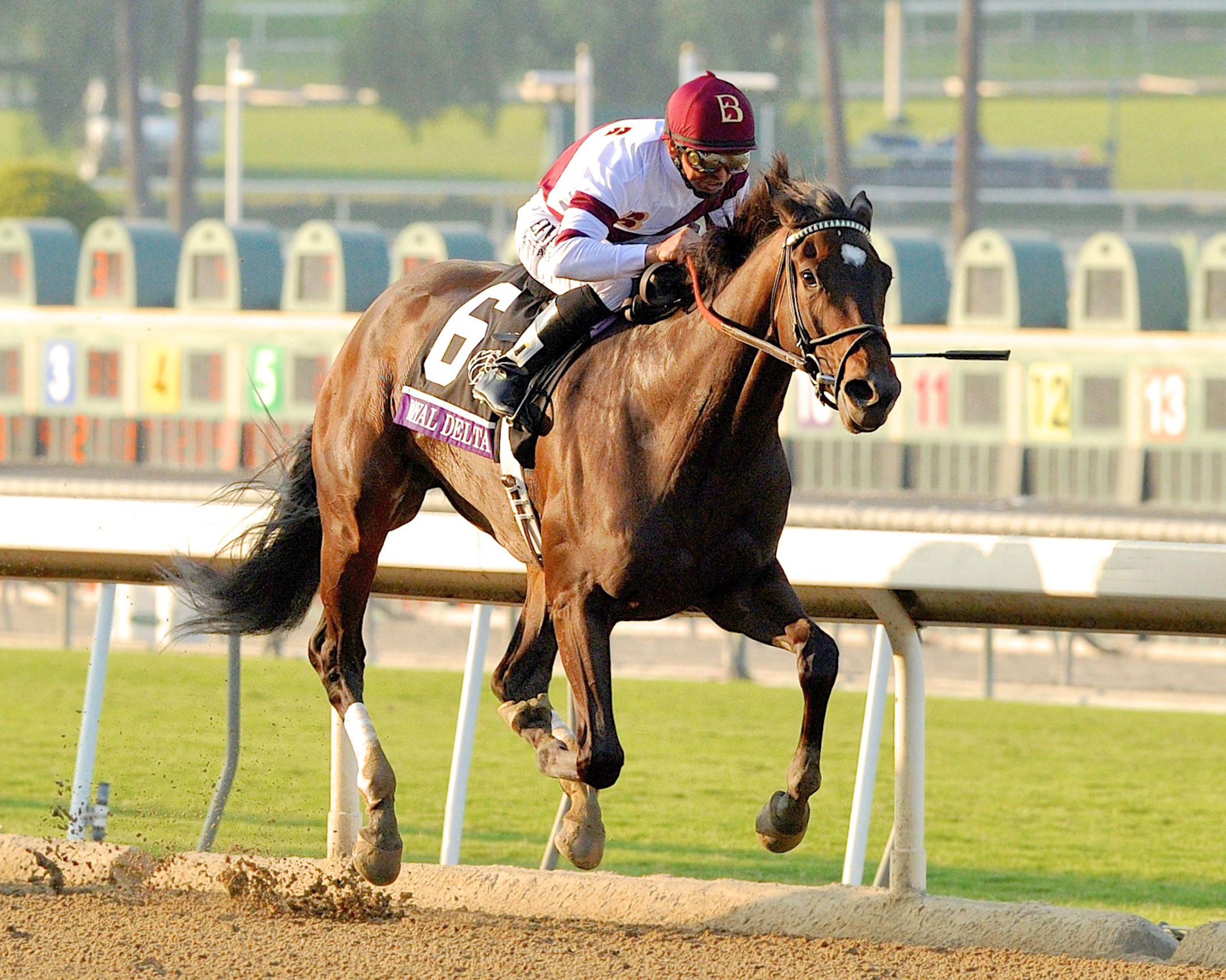 Royal Delta (Mike Smith up) winning the 2012 Breeders' Cup Ladies Classic at Santa Anita (Bob Mayberger)