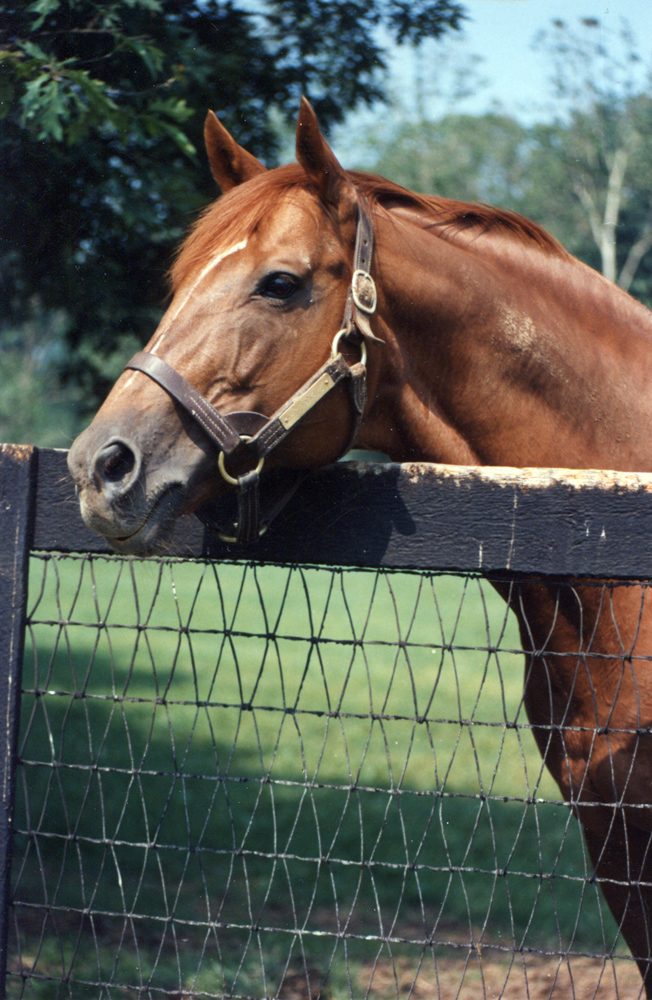 Secretariat at Claiborne Farm, 1986 (Barbara D. Livingston/Museum Collection)