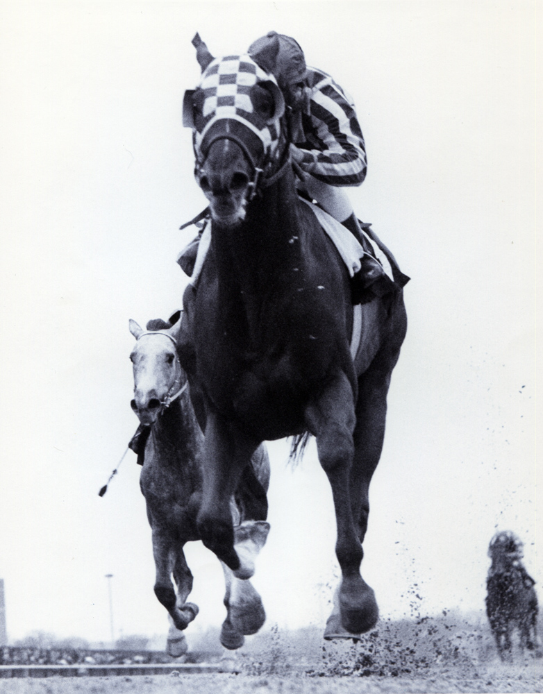 Secretariat (Ron Turcotte up) winning the 1973 Gotham at Aqueduct (Bob Coglianese/Museum Collection)