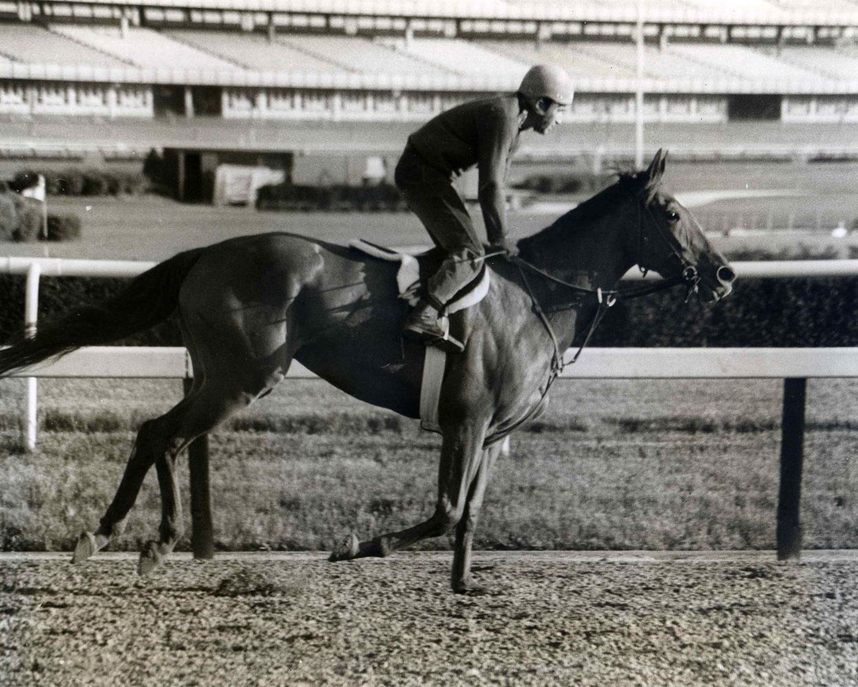 Shuvee during morning workouts at Belmont Park, September 1969 (NYRA/Paul Schafer /Museum Collection)