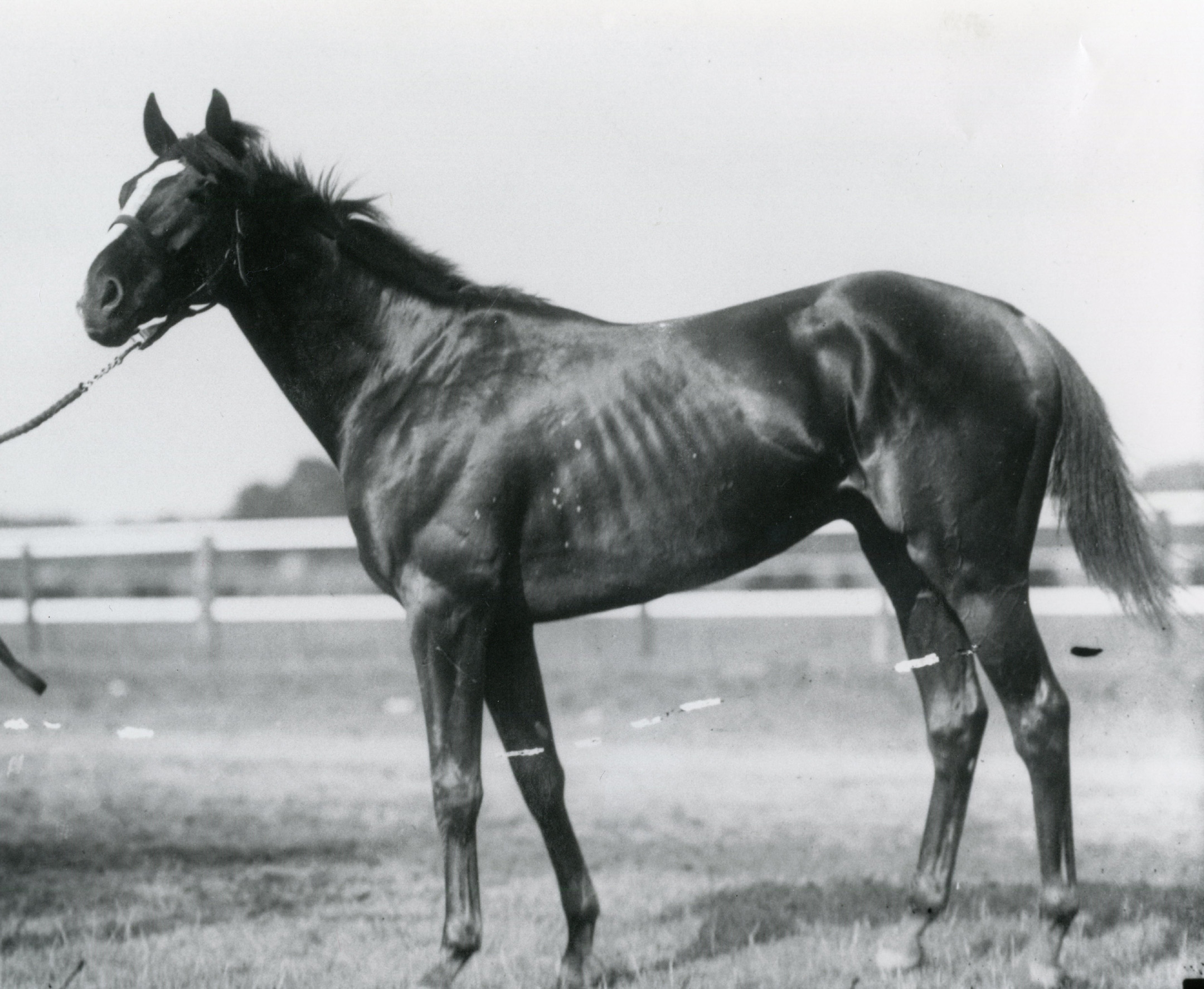 Sir Barton (Keeneland Library Cook Collection/Museum Collection)