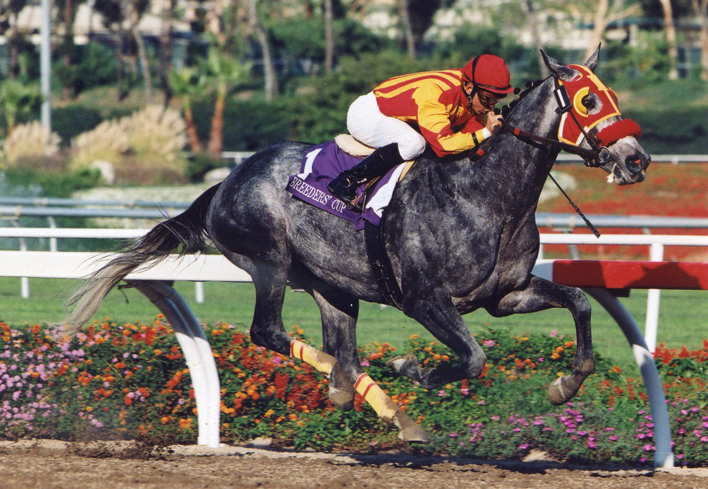 Skip Away (Mike Smith up) winning the 1997 Breeders' Cup Classic at Hollywood Park (Barbara D. Livingston/Museum Collection)