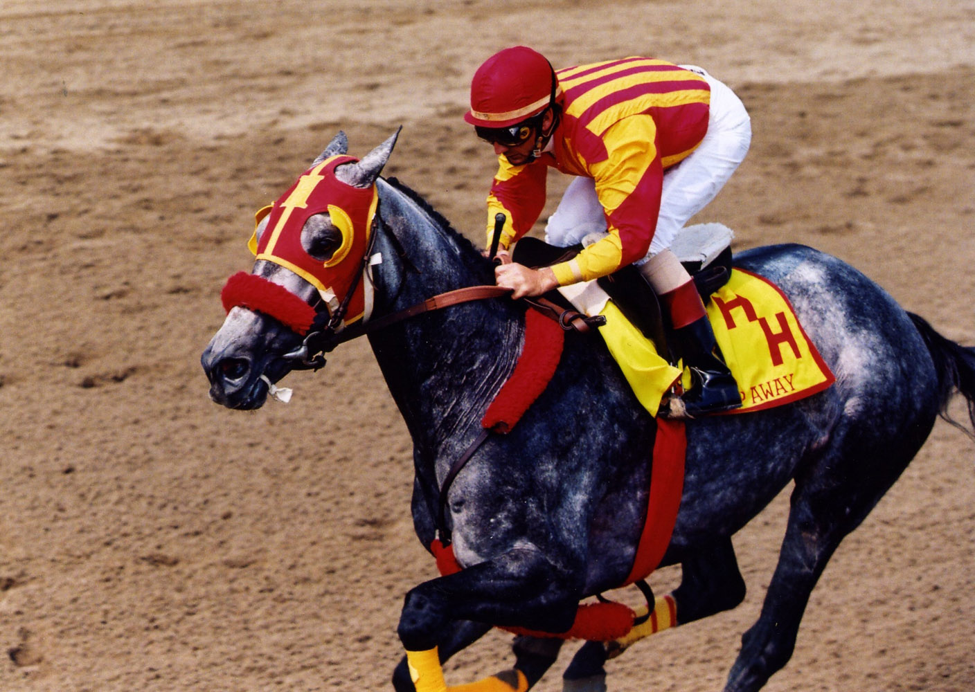 Skip Away (Jerry Bailey up) during a public workout at Saratoga, 1998 (Barbara D. Livingston/Museum Collection)