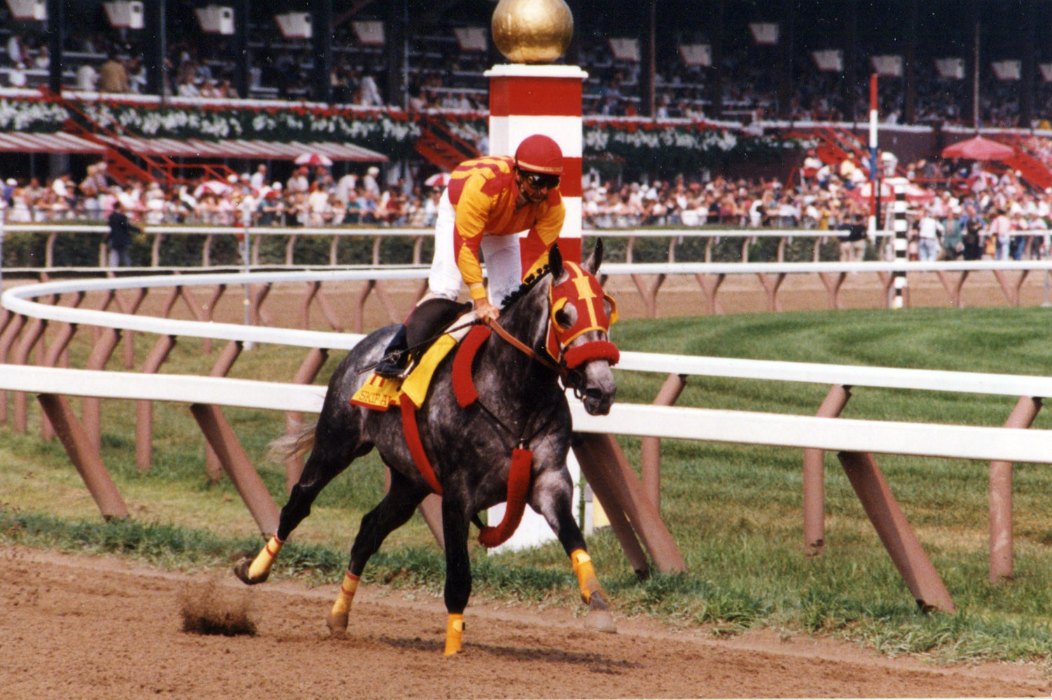 Skip Away (Jerry Bailey up) during a public workout at Saratoga, 1998 (Mike Pender/Museum Collection)