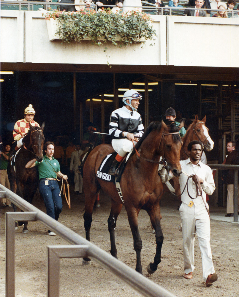 Slew o' Gold (Angel Cordero up) entering the track for the 1983 Belmont Stakes (Museum Collection)