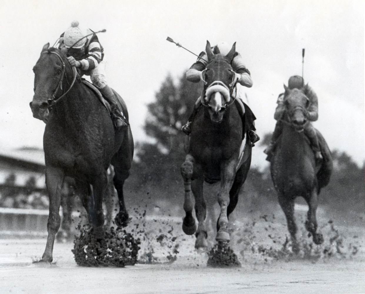 Slew o' Gold (Angel Cordero up) winning the 1984 Woodward at Belmont (Museum Collection)