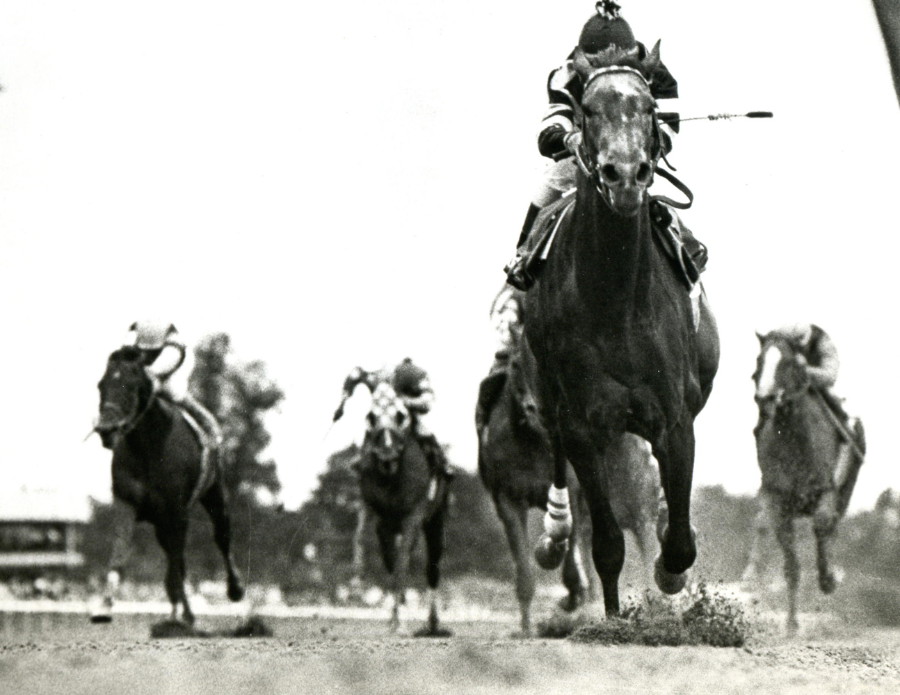 Spectacular Bid (Bill Shoemaker up) winning the 1979 Marlboro Cup at Belmont Park (NYRA/Museum Collection)