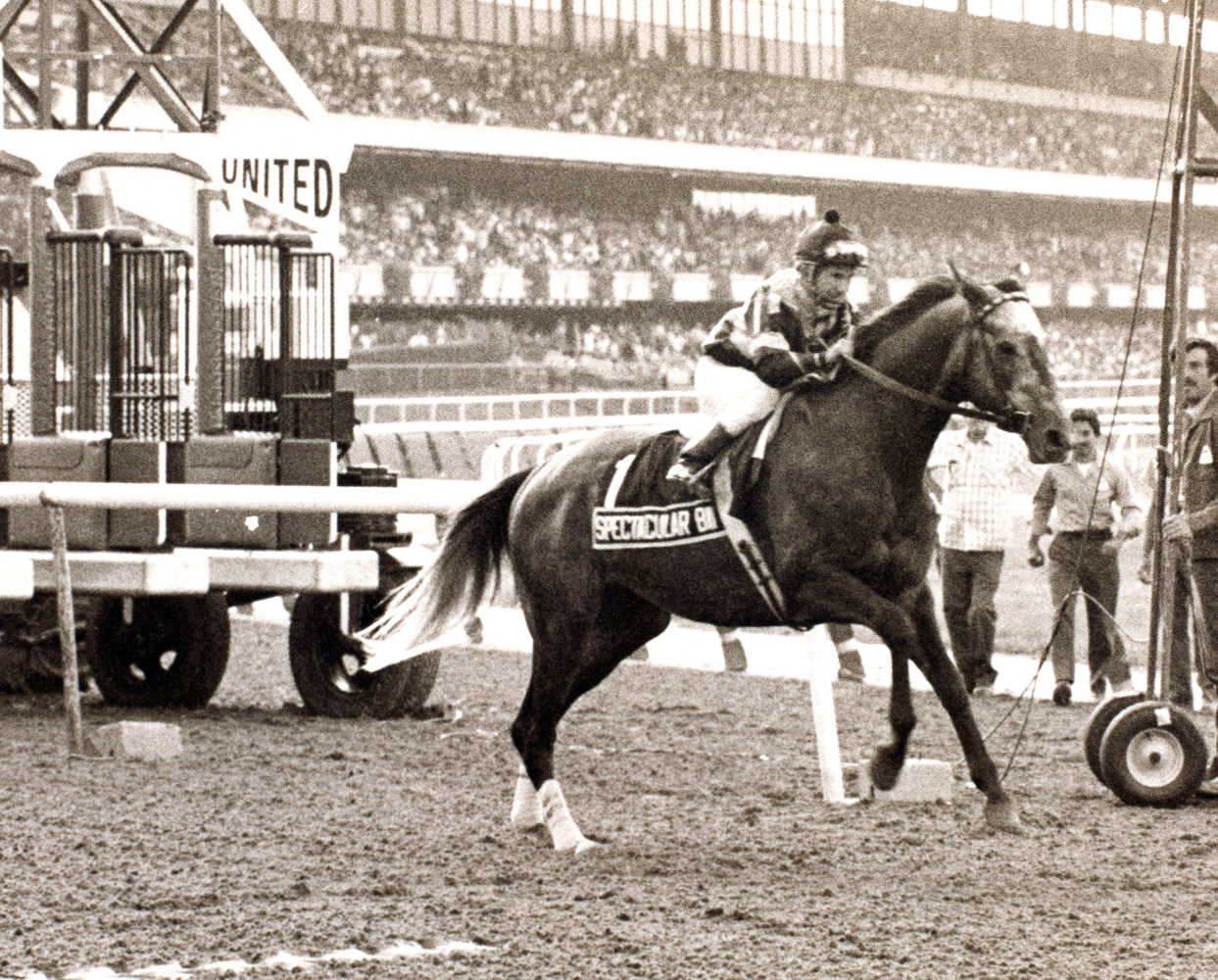 Spectacular Bid (Bill Shoemaker up) breaking from the gate for his walkover in the 1980 Woodward at Belmont, his final career race (Museum Collection)