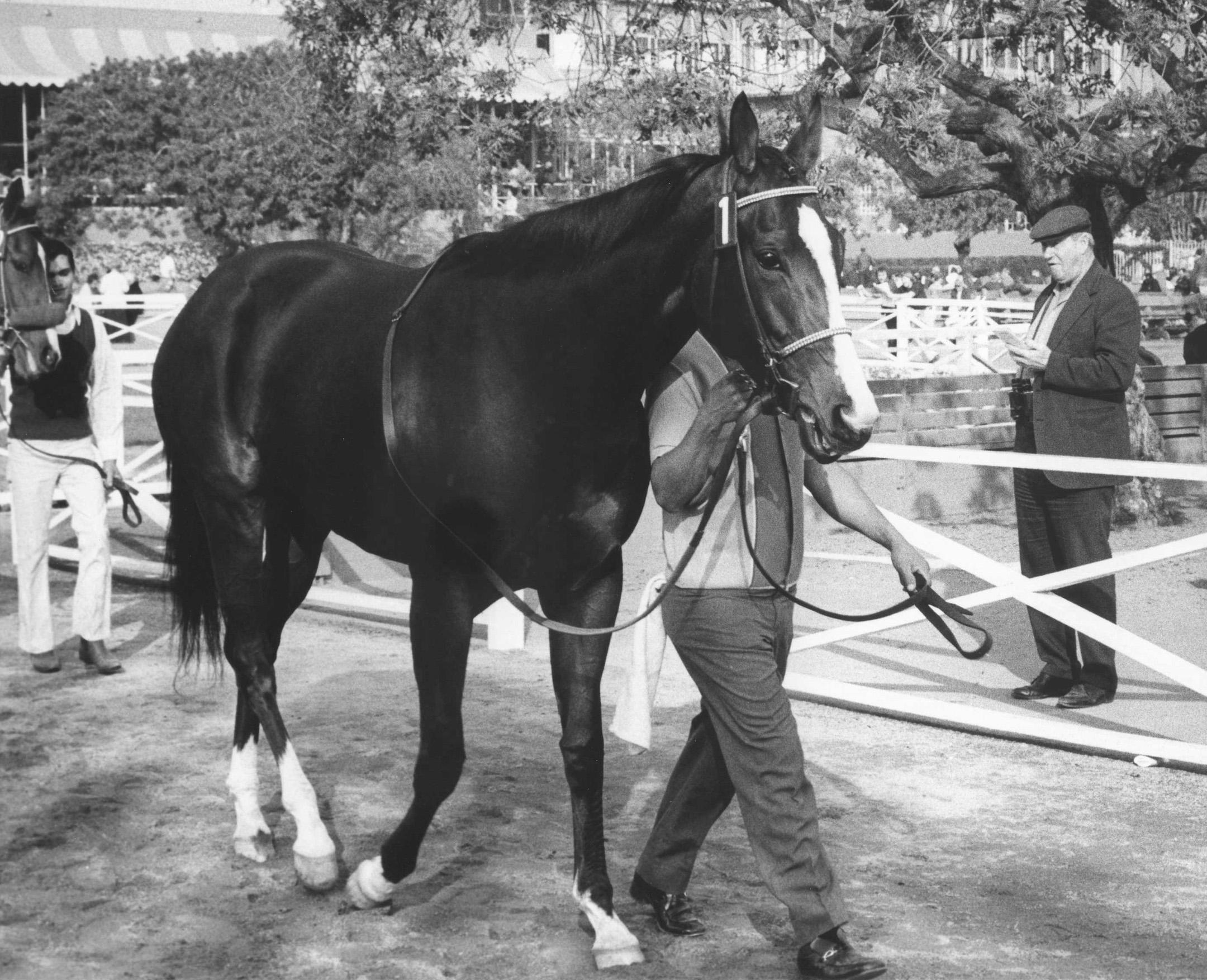 Susan's Girl entering the paddock for the 1974 Santa Maria Handicap at Santa Anita Park (Bill Mochon/Museum Collection)
