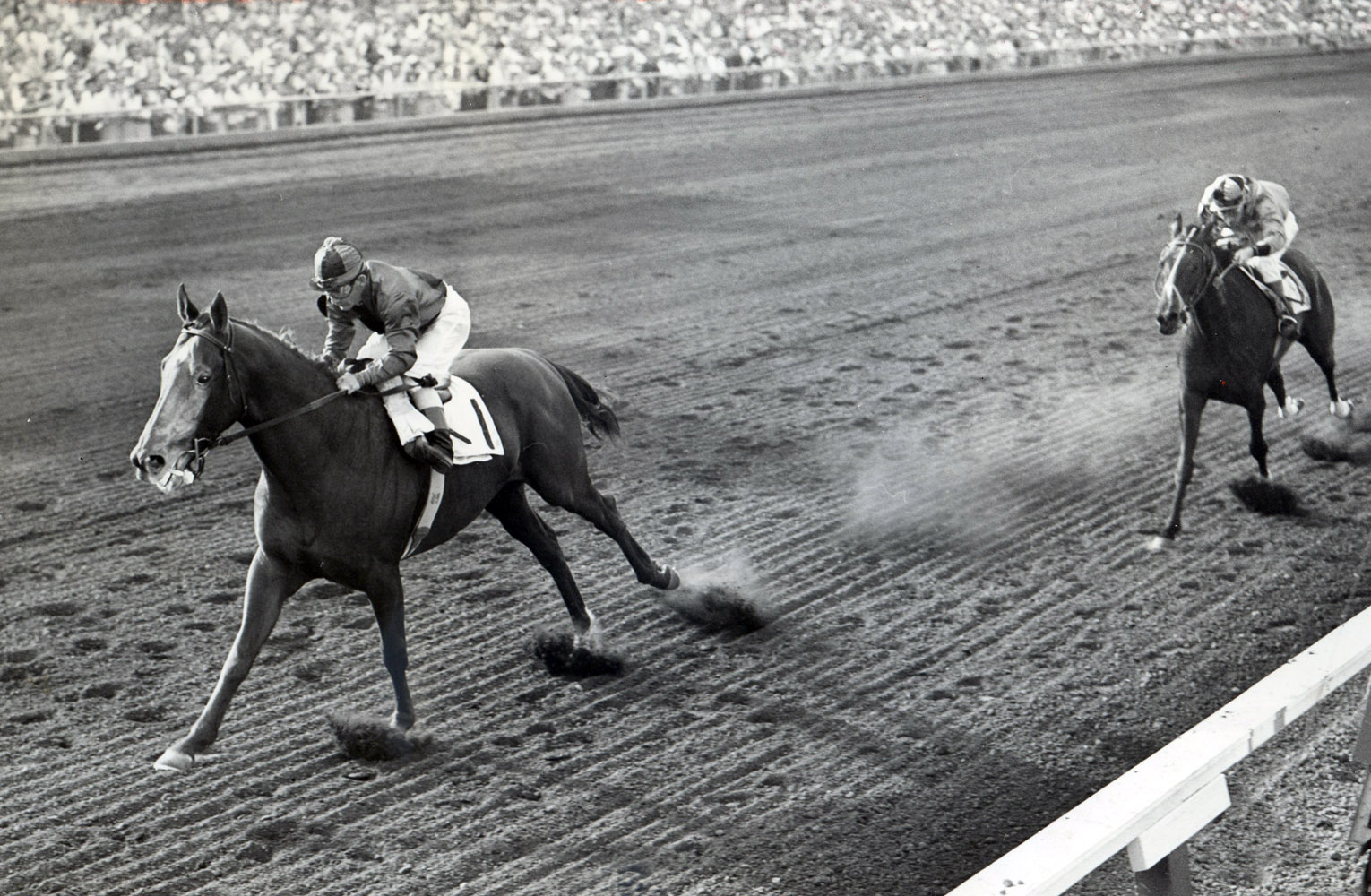 Swaps (Bill Shoemaker up) winning the 1956 Broward Handicap at Gulfstream Park (Museum Collection)