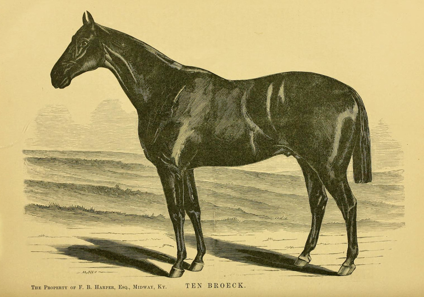 "Illustration of Ten Broeck from ""Famous American Racehorses,"" 1877 (Museum Collection)"