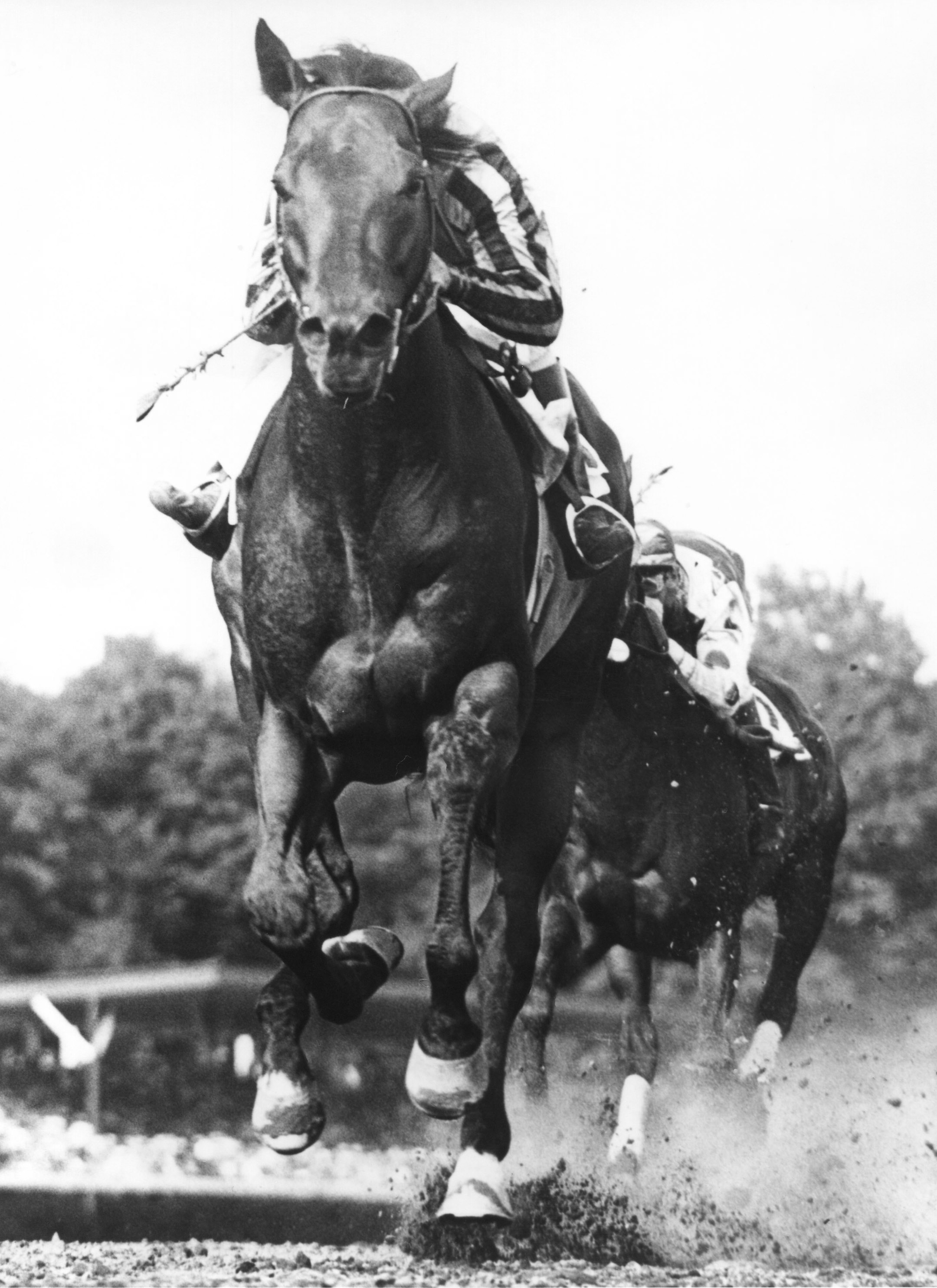 Tom Fool (Ted Atkinson up) winning the 1953 Whitney at Saratoga (Bert Morgan/Museum Collection)