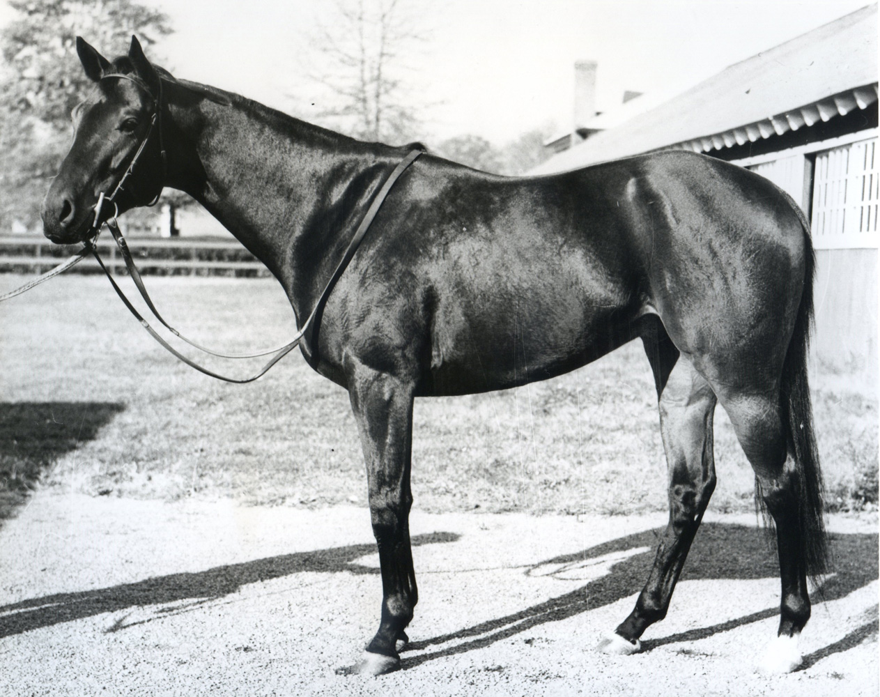 Tom Fool (Keeneland Library Morgan Collection/Museum Collection)
