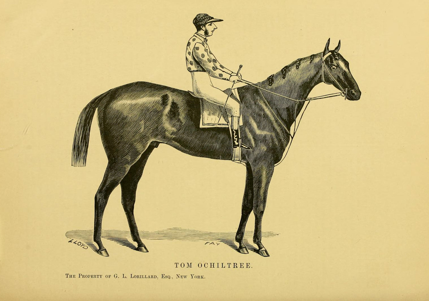 """Illustration of Tom Ochiltree from """"Famous American Racehorses,"""" 1877 (Museum Collection)"""