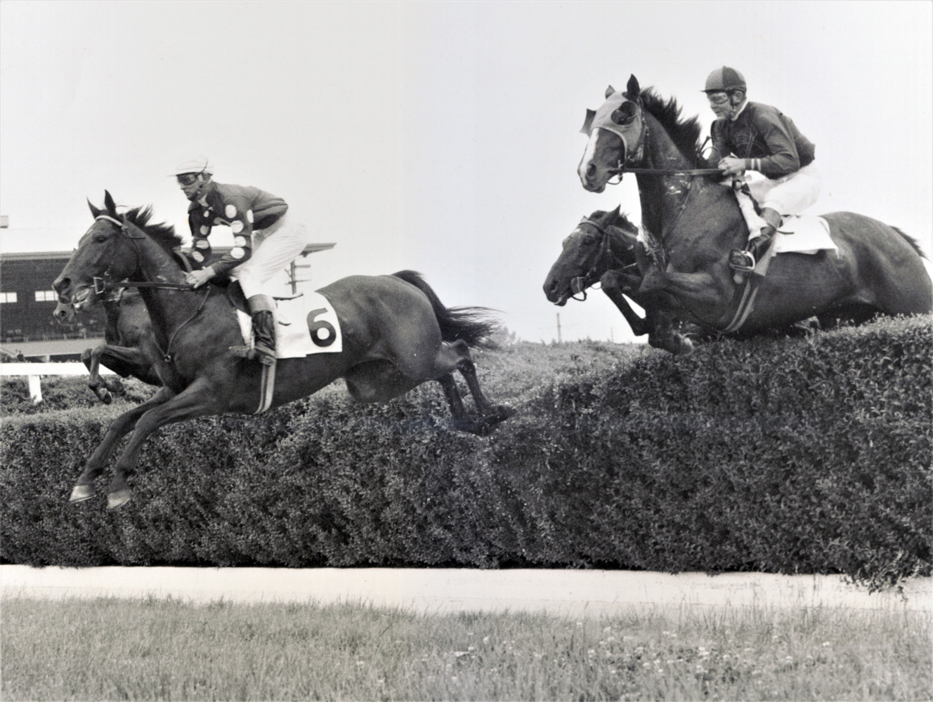 Tuscalee (#6 on left) clearing a jump in the Tom Roby Steeplechase at Delaware Park, June 1966 (Keeneland Library Thoroughbred Times Collection)