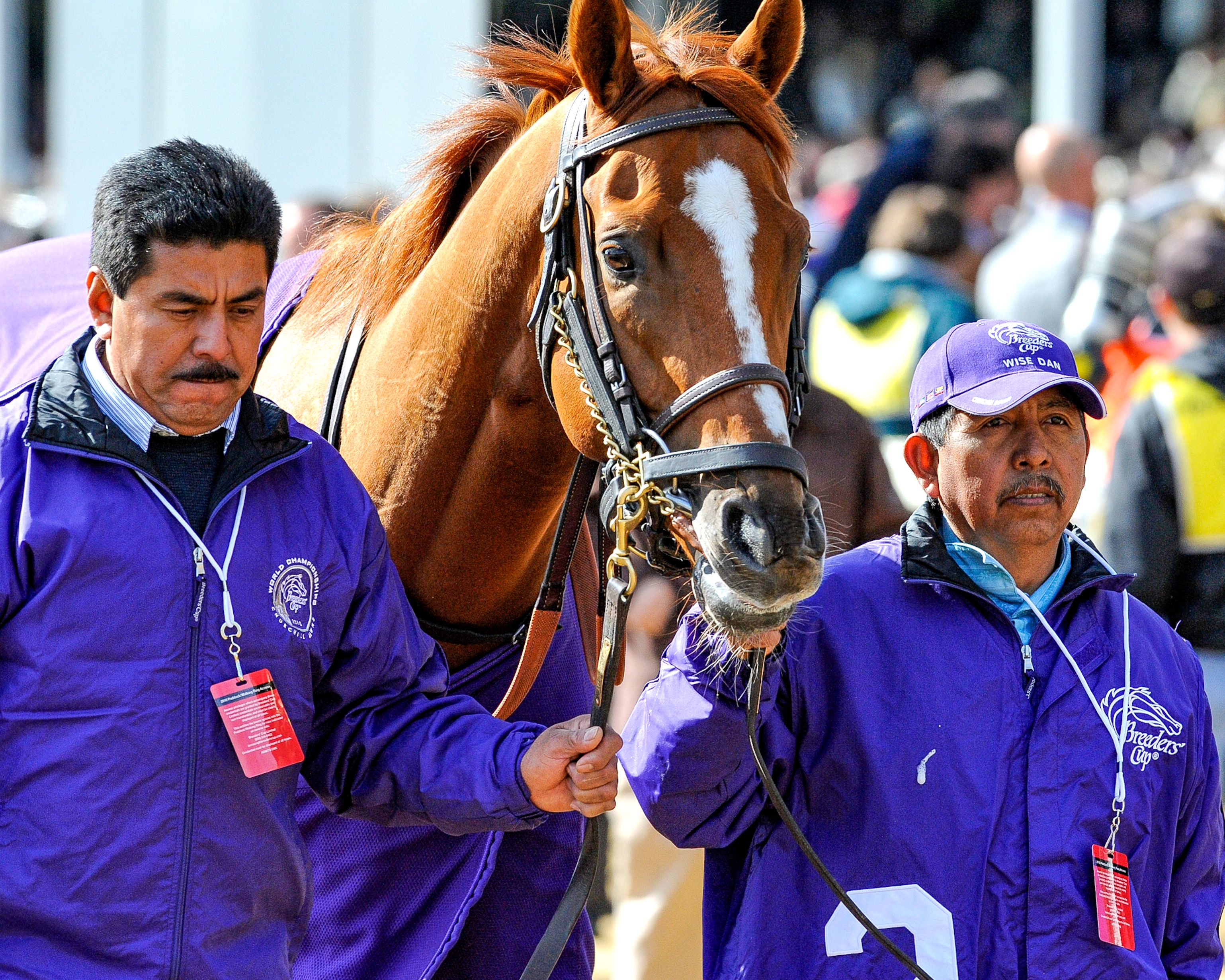 Wise Dan (Bob Mayberger)