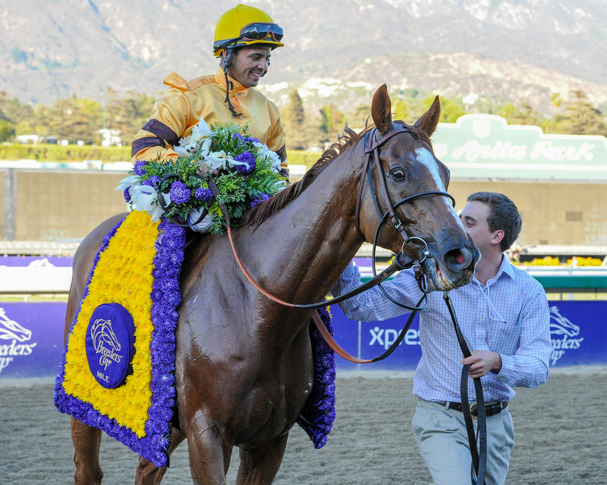 Wise Dan (Jose Lezcano up) after winning the 2013 Breeders Cup' Mile at Santa Anita, his second consecutive Breeders' Cup victory (Bob Mayberger)