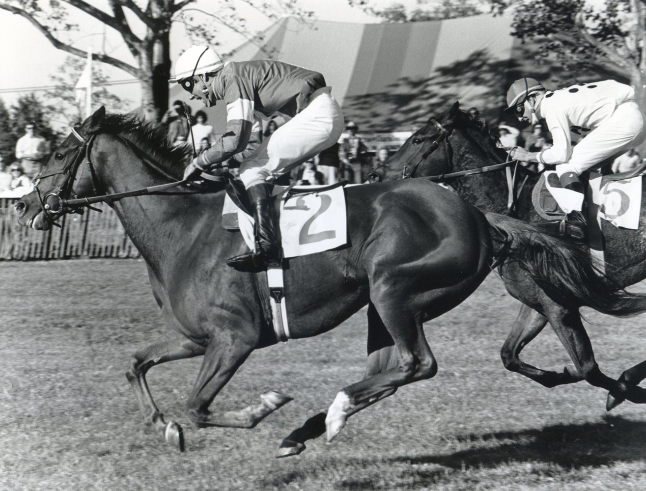 Zaccio (John Cushman up) racing to victory in the 1981 Grand National Handicap (Douglas Lees/Museum Collection)