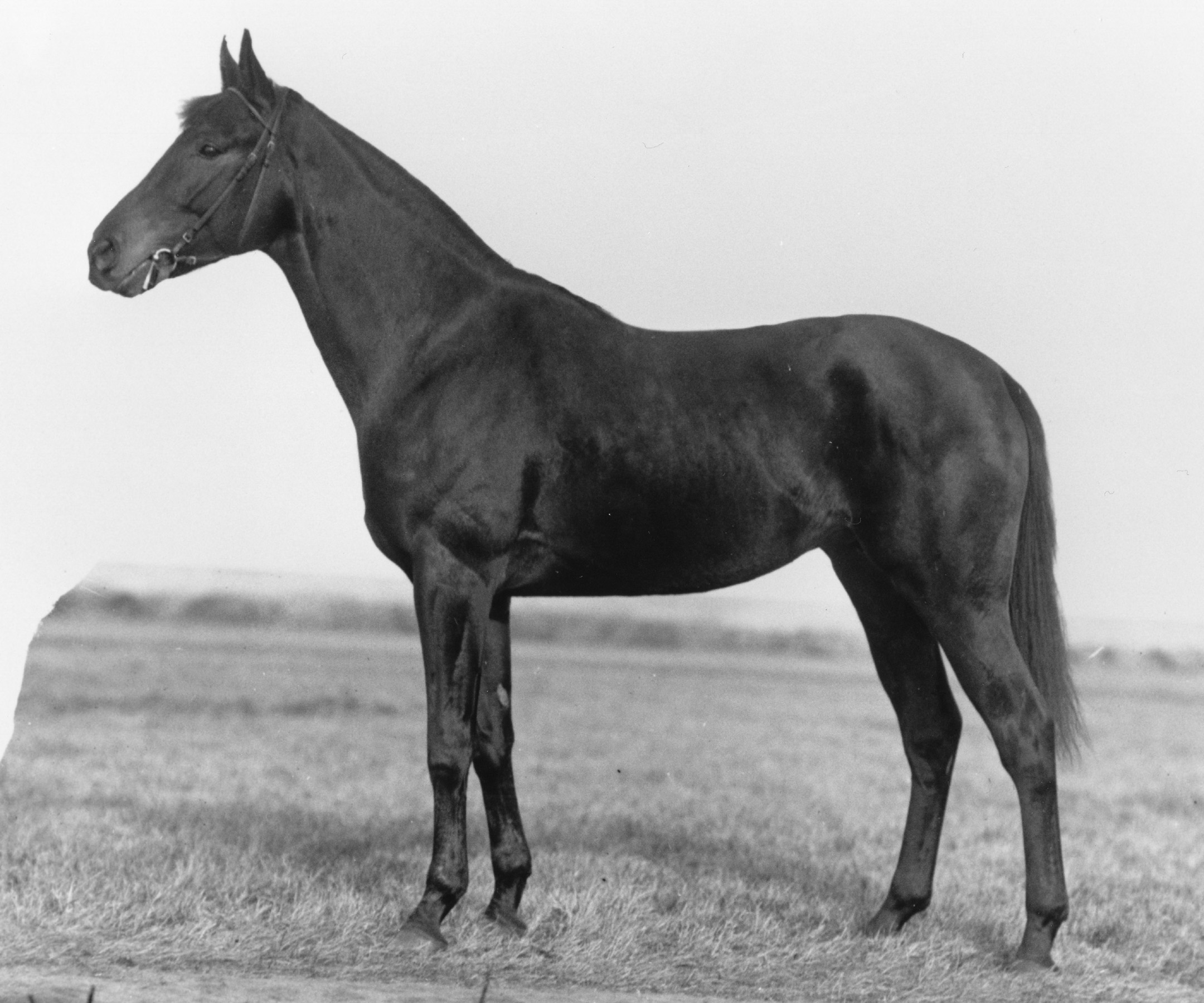 Zev (Keeneland Library Cook Collection/Museum Collection)