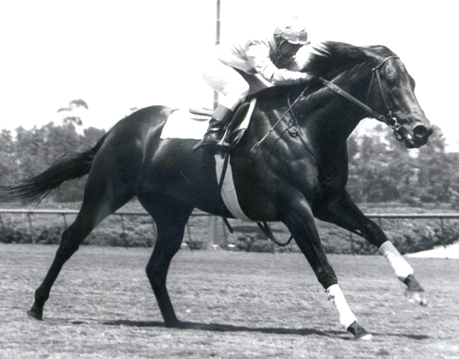 Ack Ack in 1971 at Hollywood Park (Bill Mochon/Museum Collection)