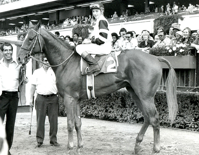 Affirmed (Steve Cauthen up) in the winner's circle for the 1977 Belmont Futurity (Museum Collection)