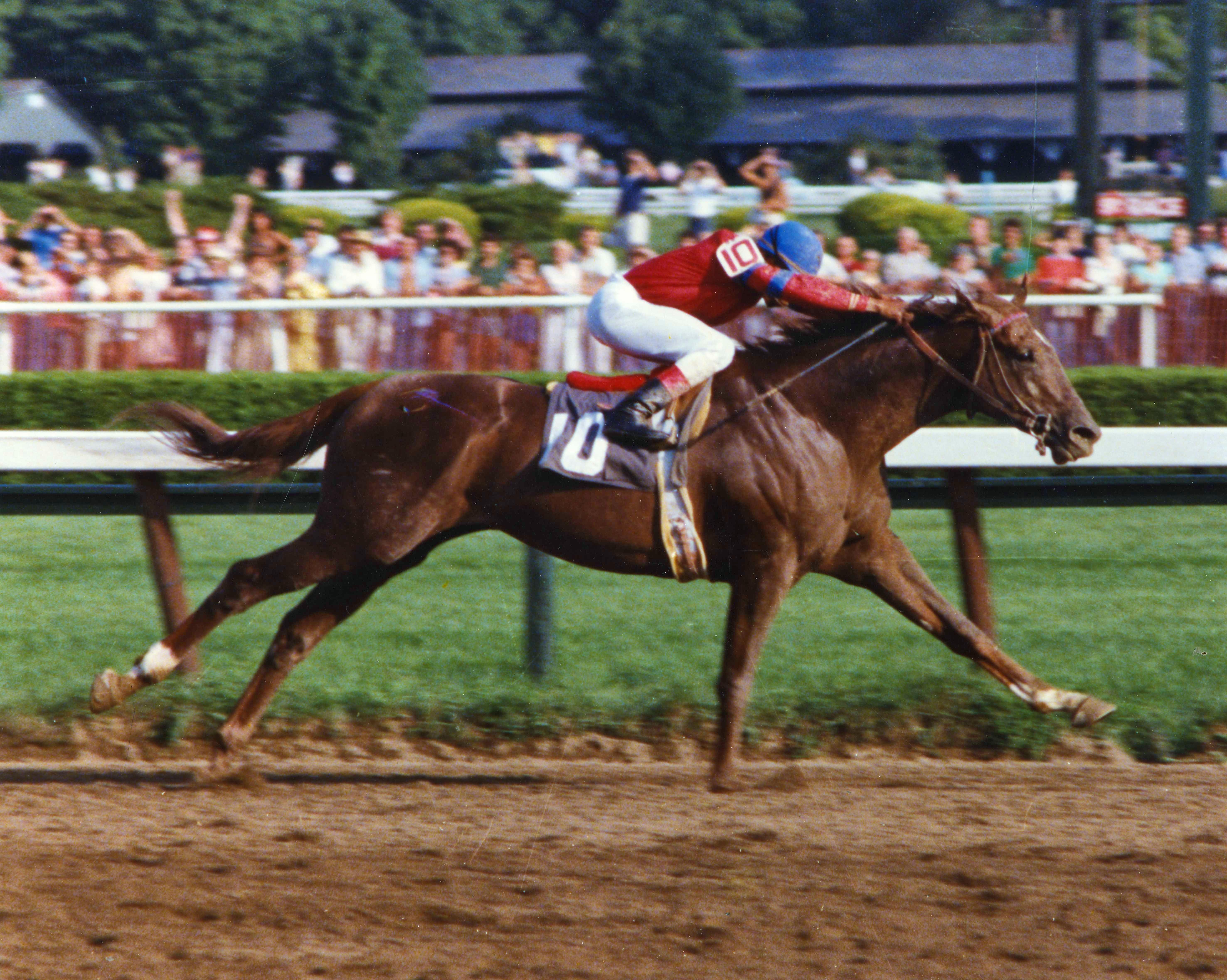 Alydar (Jorge Velasquez up) wins the 1978 Whitney Handicap at Saratoga (Barbara D. Livingston/Museum Collection)