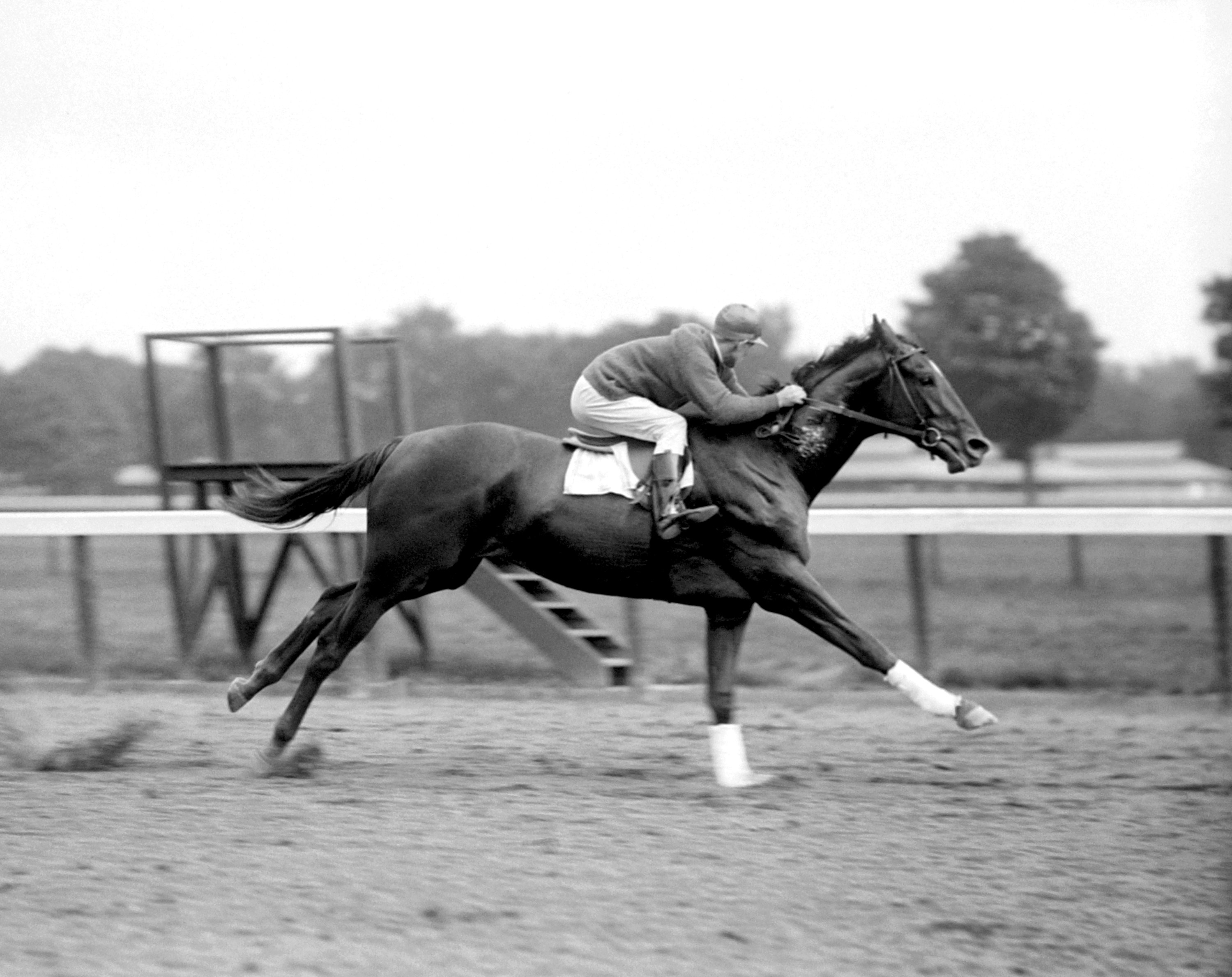Man o' War working out at Saratoga (Keeneland Library Cook Collection)