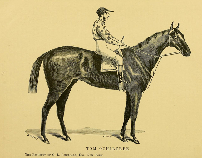 "Illustration of Tom Ochiltree from ""Famous American Racehorses,"" 1877 (Museum Collection)"