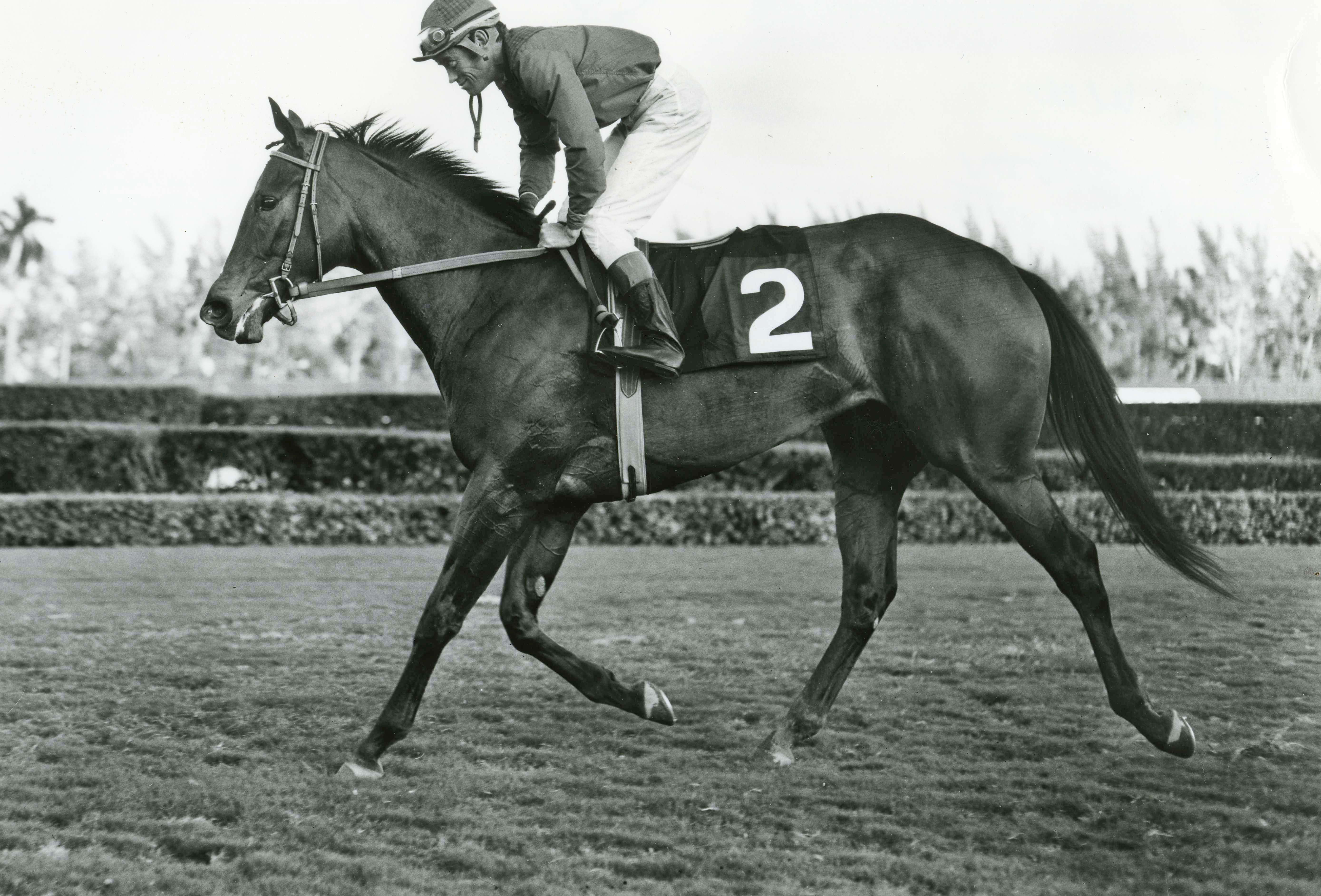 Ta Wee (John Rotz up) in the 1969 Jasmine Stakes at Hialeah Park (Jim Raftery Turfotos/Museum Collection)