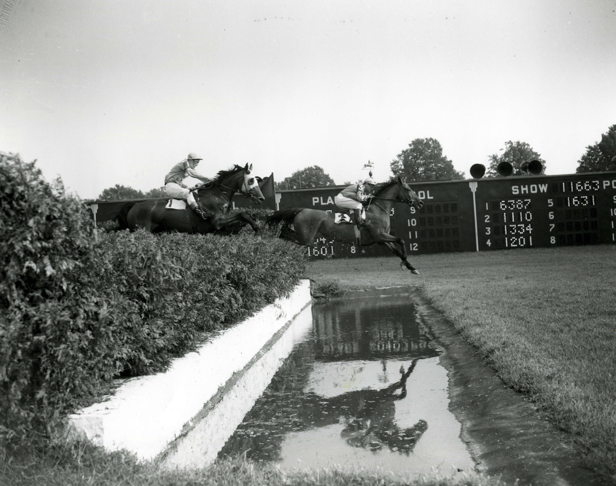 Frank Dooley Adams and Oedipus clearing a water obstacle in the 1950 Saratoga Steeplechase Handicap (Keeneland Library Morgan Collection/Museum Collection)
