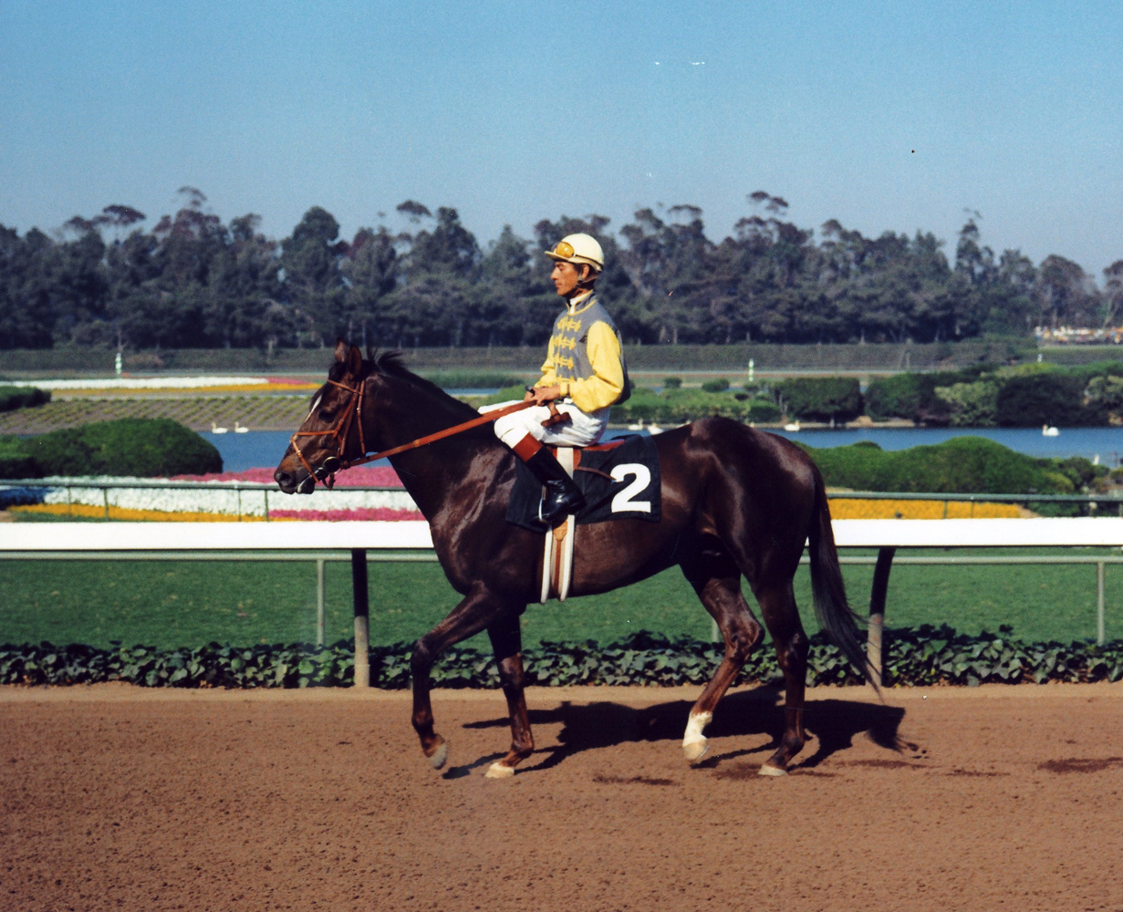 Braulio Baeza with Arts and Letters at Hollywood Park (Vic Stein & Assoc./Bill Mochon Photo Collection /Museum Collection)