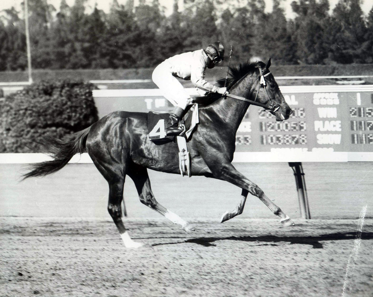 Bill Boland and Silver Spoon winning the 1959 Cinema Handicap at Hollywood Park (Museum Collection)