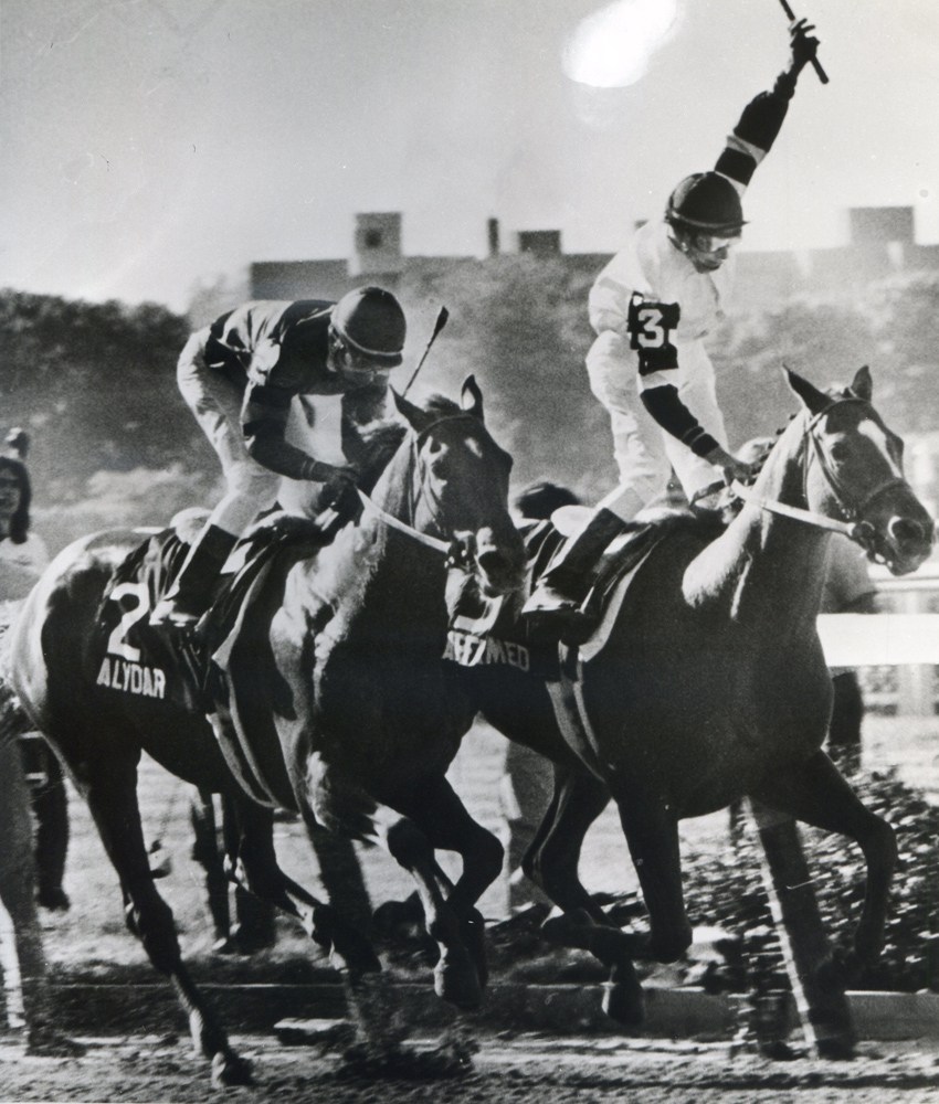 Steve Cauthen and Affirmed defeating Jorge Velasquez and Alydar in the 1978 Belmont to win the Triple Crown (Museum Collection)