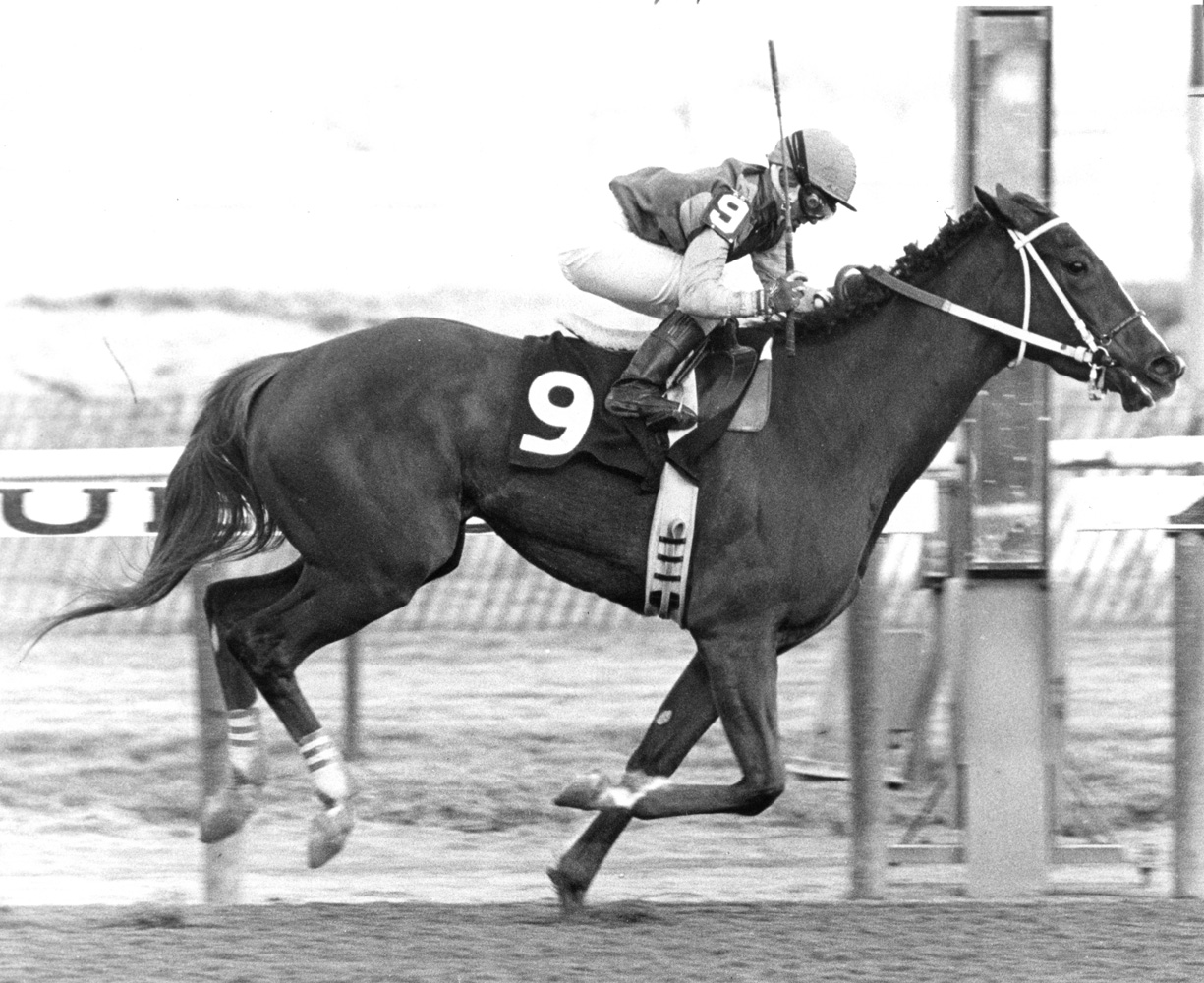 Julie Krone becomes the winningest female jockey in March 1988 aboard Squawter at Aqueduct (Courtesy of Ken Grayson)