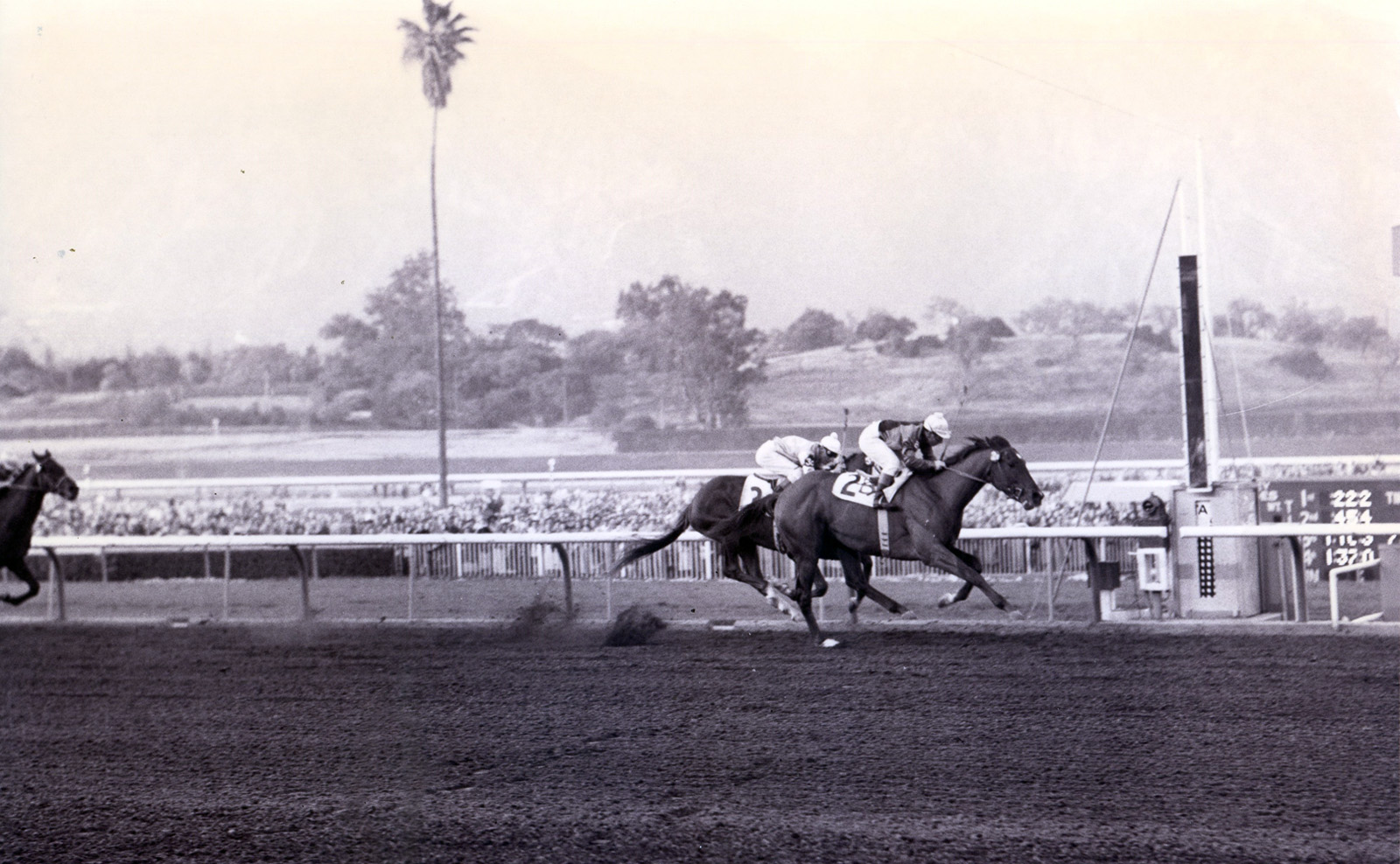 Johnny Longden and Swaps winning the 1955 Santa Anita Derby (Santa Anita Photo/Museum Collection)