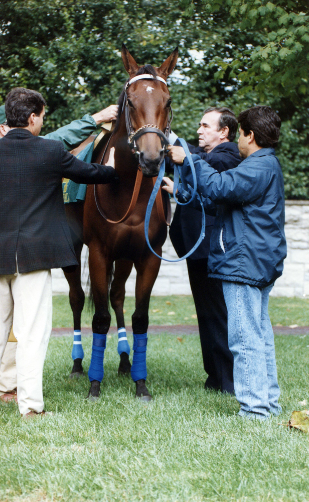 Ron McAnally saddling Paseana (Robin Ann Barry/Museum Collection)